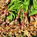 Ramps Have Arrived at the Farmers Market!